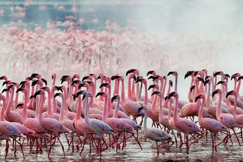 Flamingo Facts For Kids Interesting Facts About Flamingos