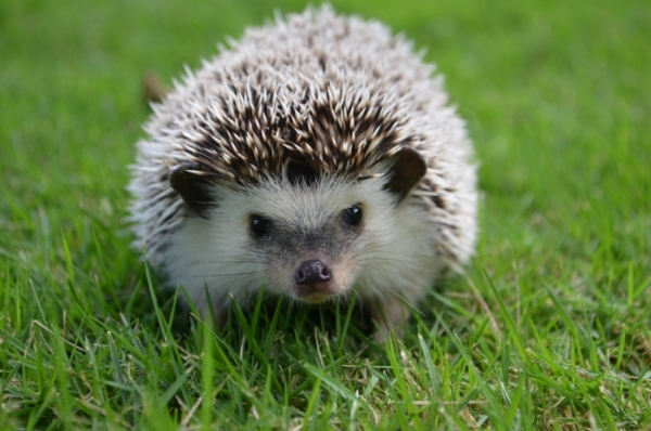 ... For Kids Fun Facts About Hedgehogs For Kids | Cool Facts For Kids